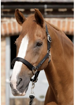 "Недоуздок ""Plain Padded "" - Premier Equine"
